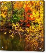 Fall Reflection Acrylic Print by Robert Mitchell