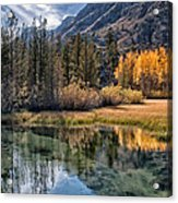 Fall Reflections Acrylic Print by Cat Connor