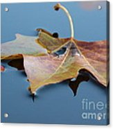 Fall Reflections Acrylic Print by Jane Ford