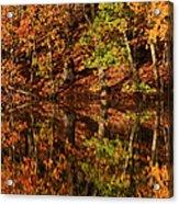 Fall Reflections Acrylic Print by Karol Livote