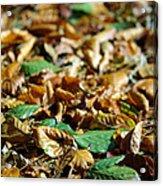 Fallen Leaves Acrylic Print by Carlos Caetano