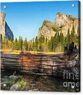 Fallen Tree In Yosemite Acrylic Print by Jane Rix