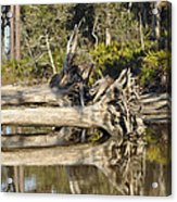 Fallen Trees Reflected In A Beach Tidal Pool Acrylic Print by Bruce Gourley