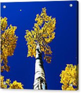 Falling Leaf Acrylic Print by Chad Dutson