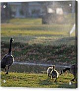 Family Affair Acrylic Print by Camille Lopez
