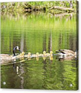 Family Outing Acrylic Print by Bill Pevlor