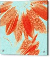 Fancy Schmancy Gerberas Acrylic Print by Bonnie Bruno