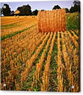 Farm Field With Hay Bales At Sunset In Ontario Acrylic Print by Elena Elisseeva