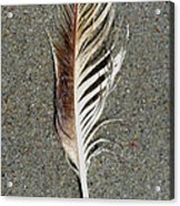 Feather On The Beach Acrylic Print by Patricia Januszkiewicz