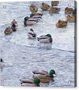 February  And Cold Ducks Acrylic Print by Rosemarie E Seppala