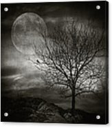 February Tree Acrylic Print by Taylan Soyturk