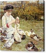 Feeding Ducks Acrylic Print by Edward Killingworth Johnson