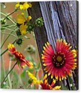 Fenceline Wildflowers Acrylic Print by Robert Frederick