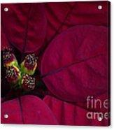 Festive Red Acrylic Print by Jacky Parker
