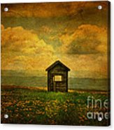 Field Of Dandelions Acrylic Print by Lois Bryan