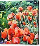 Field Of Flowers Acrylic Print by Jeff Kolker