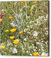 Field Of Flowers Acrylic Print by Artist and Photographer Laura Wrede