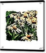 Field Of Love Acrylic Print by Marsha Heiken