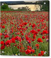Field Of Poppies At The Lake Acrylic Print by Guido Montanes Castillo