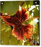 First Signs Of Autumn Acrylic Print by Dry Leaf