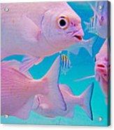 Fish Frenzy Acrylic Print by Carey Chen