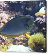 Fish - National Aquarium In Baltimore Md - 1212121 Acrylic Print by DC Photographer