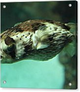 Fish - National Aquarium In Baltimore Md - 1212136 Acrylic Print by DC Photographer