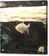 Fish - National Aquarium In Baltimore Md - 121249 Acrylic Print by DC Photographer