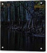 Fisheating Creek 28 Acrylic Print by Carol Kay