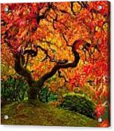 Flaming Maple Acrylic Print by Darren  White