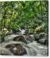 Flooded Small Stream  Acrylic Print by Dan Friend