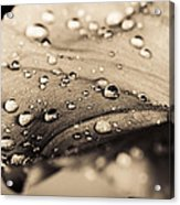 Floral Close-up IIi Acrylic Print by Marco Oliveira