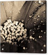 Floral Close-up V Acrylic Print by Marco Oliveira