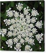 Floral Disc Acrylic Print by Sonali Gangane