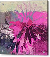 Floral Fiesta - S31at01b Acrylic Print by Variance Collections