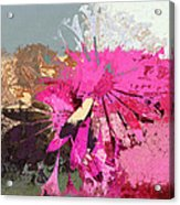 Floral Fiesta - S33ct01 Acrylic Print by Variance Collections
