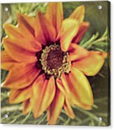 Flower Beauty I Acrylic Print by Marco Oliveira