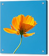 Flower - Growing Up In Brooklyn Acrylic Print by Mike Savad