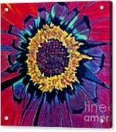 Flowerburst Acrylic Print by Rory Sagner