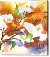 Flowering Dogwood IIi Acrylic Print by Kip DeVore