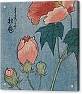 Flowering Poppies Tanzaku Acrylic Print by Ando Hiroshige