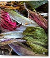 Flowers Acrylic Print by Bob Orsillo