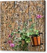Flowers On Wall - Taromina Acrylic Print by David Smith