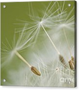 Fly Away Acrylic Print by Anne Gilbert