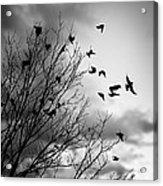 Flying Birds Acrylic Print by Elena Elisseeva