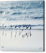 Flying Free Acrylic Print by Jenny Rainbow
