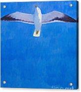 Flying Seagull Acrylic Print by Lutz Baar