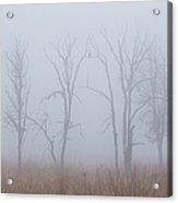 Fog Acrylic Print by Angie Vogel