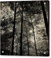 Fog In The Forest Acrylic Print by Lorraine Heath