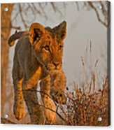 Footloose Acrylic Print by Ashley Vincent